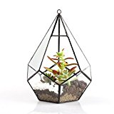 Modern Artistic Clear Hanging Air Planter Tear Drop Diamond Glass Geometric Terrarium Large 17.5cm Width X 17.5cm length X 22cm Height Tall Clear fro Succulents Ferns Cacti