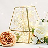 Metal & Glass Terrarium - Gold Finish - 18.5cm - Outdoor by Festive Lights (Geometric)