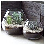 Set of 2 Decorative Modern Round Clear Glass Display Vases / Bowl Candleholders / Air Plant Terrariums
