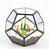 Clear Pentagon Dodecahedron Glass Geometric Terrarium Succulent Plant Terrarium