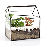 House Shape Close Glass Geometric Terrariumn Tabletop Succulent Plant Box Planter Moss Fern with Swing Lid