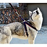 PYRUS Pet Supplies for Dogs Leashes Adjustable Harnesses and Heavy Duty Denim Dog Training Walking(S Size)