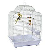 Rainforest Brasilia Cockatiel Small Parakeet Small Conure Small bird cage