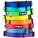 Blueberry Pet Classic Solid Color Nylon Dog Collar in Dark Orchid, Neck 30cm-40cm, Small, Collars for Dogs, Matching Lead & Harness Available Separately