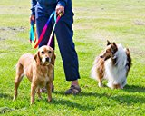 Dog Leash Rainbow - Dog Lead (2.5m Rainbow) (8FT)