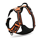 Front Range Dog Harness Harness, No-Pull. 3M Reflective Stitching for Improved Night-Time Visibility. Orange, Size: Extra Small (XS)