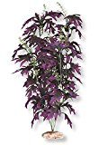 Mojetto Fish & Aquatic Supplies Plant - Amazon Butterfy Leaf Large Plum