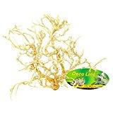 Lucky Reptile DDB-B Desert Bush Bleached, 15 - 20 cm
