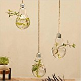 Castnoo Wall Hanging Terrarium Glass Vase Flower Plant Air Plant Pot Container Home Office Decoration Bulb Shape