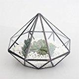 Diamond Glass Geometric Terrarium Tabletop Succulent Plant Terrarium Box with Door Reptile Insect especial for raising Moss 14cm Height 16cm Width