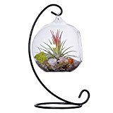 Mkono Air Plant Terrarium Planter Hanging Planter Globe Container Pot Decorative Artificial Succulent Display Vase Candle Holder (with Black Metal Stand) --1 Globe