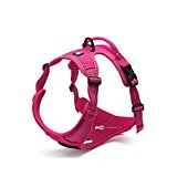 Front Range New 2016 True Love Design Dog Harness, No-Pull. 3M Reflective Stitching for Improved Night-Time Visibility (Extra Small, Pink)